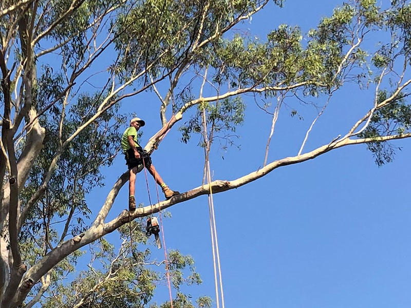 tree looping-min