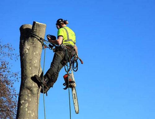 Finding Expert Tree Removalists