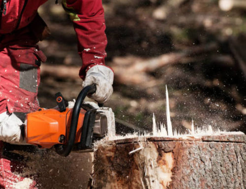 Who to call for stump removal in Brisbane
