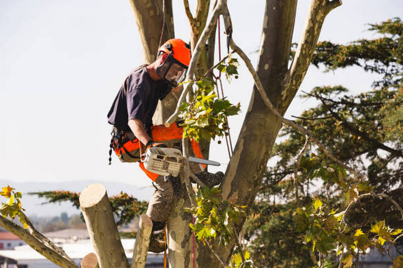 Tree Removal Brisbane