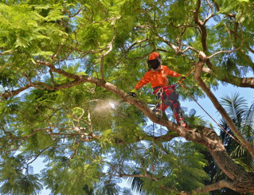 Brisbane Tree Lopping Specialist
