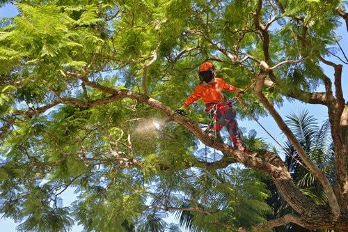 brisbane-tree-lopping-specialist