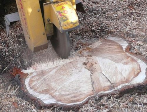 Benefits of tree stump removal