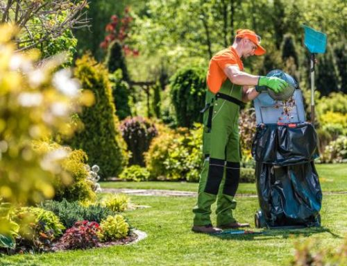 Importance of a clean yard