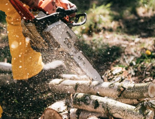 Why You need Experts for Tree Cutting Jobs
